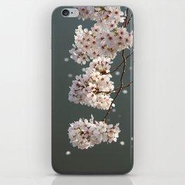 It's Raining Cherry Blossoms iPhone Skin