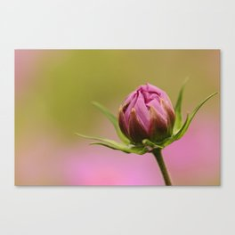 Little Buggies Home Canvas Print