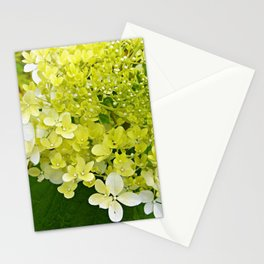 Elegant Chartreuse Green Limelight Hydrangea Macro Stationery Cards