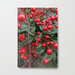 Winter Berries 8x12 Metal Print