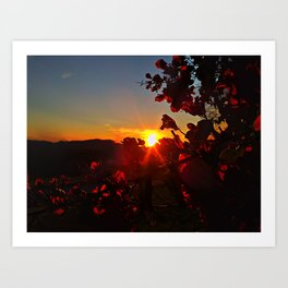 Sun Kissed Art Print