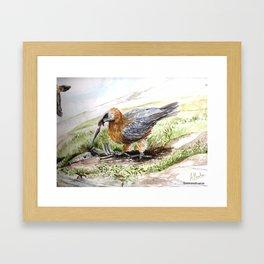 Quebrantahuesos Framed Art Print