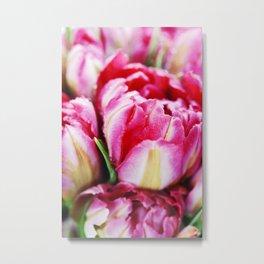 Fresh Pink tulips Metal Print