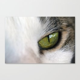 The Eye of the Domesticated Tyger Canvas Print