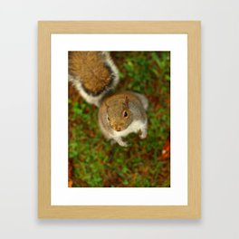 Squirrel In The Forest... Framed Art Print