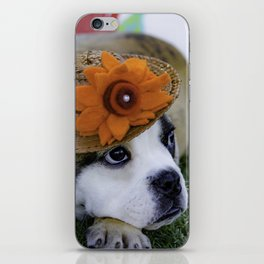 English Bulldog Puppy Wearing a Straw Hat with Bright Orange Flower for Spring iPhone Skin