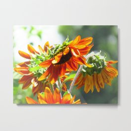 Orangey Sunflower Metal Print