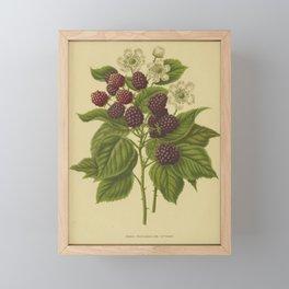 Botanical Blackberries Framed Mini Art Print