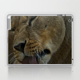 Lioness Licking Her Paw Laptop & iPad Skin