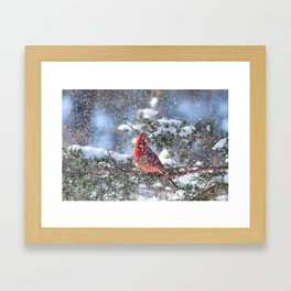 Let It Snow (Northern Cardinal) Framed Art Print
