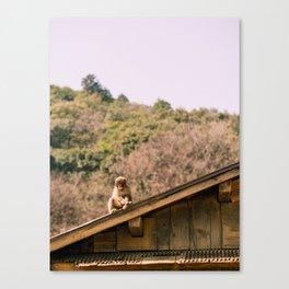 Monkey park Canvas Print