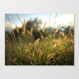 The Wheat Field Canvas Print