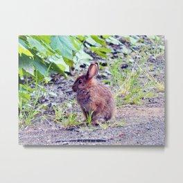 Easter Bunny perhaps Metal Print