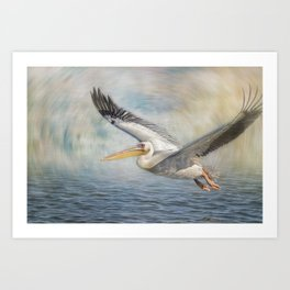 Flight of a Great White Pelican Art Print
