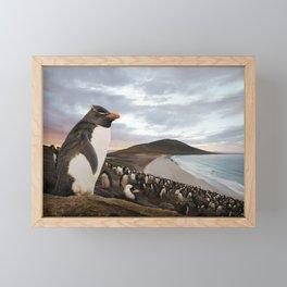 Rockhopper penguin on a beach at sunset Framed Mini Art Print