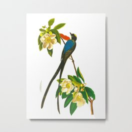 Fork-tailed flycatcher Bird Metal Print