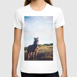 Dartmoor Pony Portrait (3) T-shirt