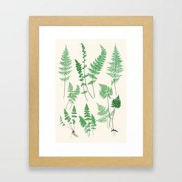 Ferns on Cream I - Botanical Print Gerahmter Kunstdruck
