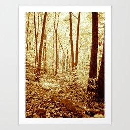 Deep in the Woods. Art Print