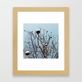 Like people, trees are all individuals Framed Art Print