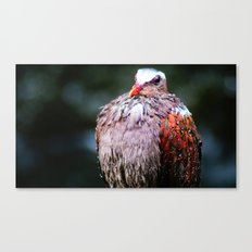 wet feathers Canvas Print
