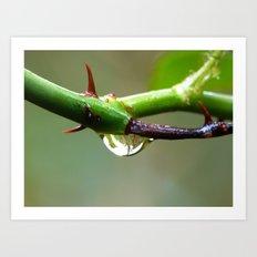rain drop and thorn Art Print