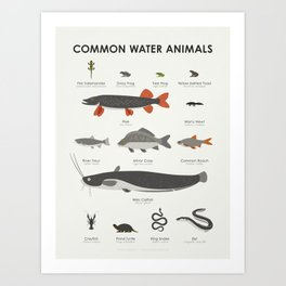 Infographic Guide to Water Animals Art Print