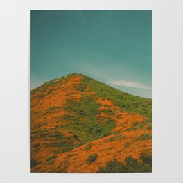 California Poppies 027 Poster