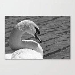 Sunning Swan by Teresa Thompson Canvas Print