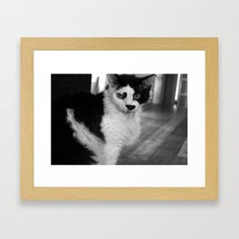 Overly Photogenic Cat, take 1 Framed Art Print