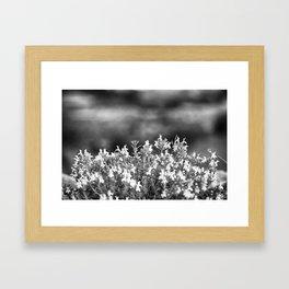 White Blossoms Framed Art Print