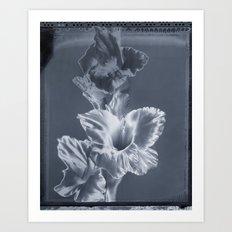 'Gladiola' Art Print