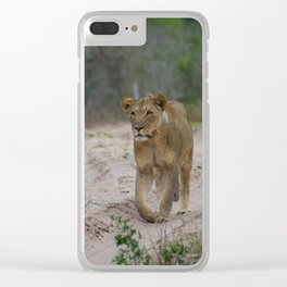Female Lion at Tembe Elephant Park Clear iPhone Case