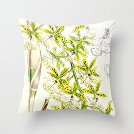 A orchid plant - Vintage illustration Throw Pillow