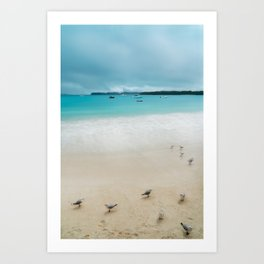 Seagulls on a pristine beach at Kuto Bay, New Caledonia. Art Print