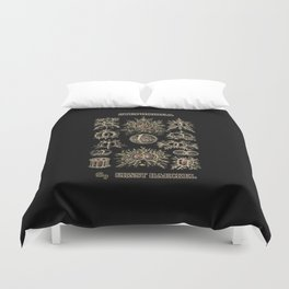 """""""Stephoidea"""" from """"Art Forms of Nature"""" by Ernst Haeckel Duvet Cover"""