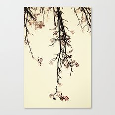 Delicate like rain Canvas Print