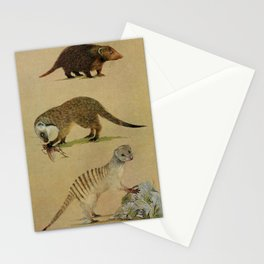 Vintage Print - Carnivores of West Africa (1974) - Kusimanse, Gambian Mongoose, Banded Mongoose Stationery Cards