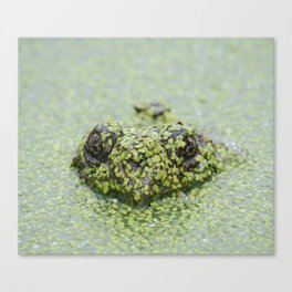 The Incognito Frog Canvas Print
