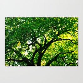 Vitreous Tree Canvas Print
