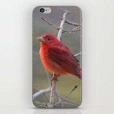 A Summer Tananger iPhone & iPod Skin