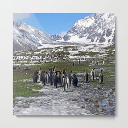 King Penguins, Snow and Glaciers Metal Print