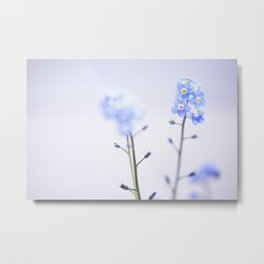 FORGET-ME-NOT III Metal Print