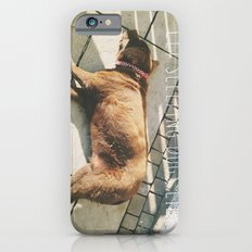 Sleeping Dogs Slim Case iPhone 6s