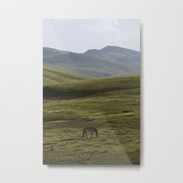 Lone Horse in the Hills of Mongolia Metal Print