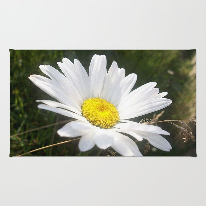 Close Up of a Margarite Daisy Flower Rug
