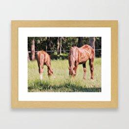 Horses feeding in a field Framed Art Print