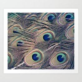 Beautiful Painted Peacock Feathers Art Print
