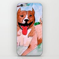 pit bull iPhone & iPod Skins featuring Pit Bull by Caballos of Colour