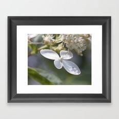 4 petal flower Framed Art Print